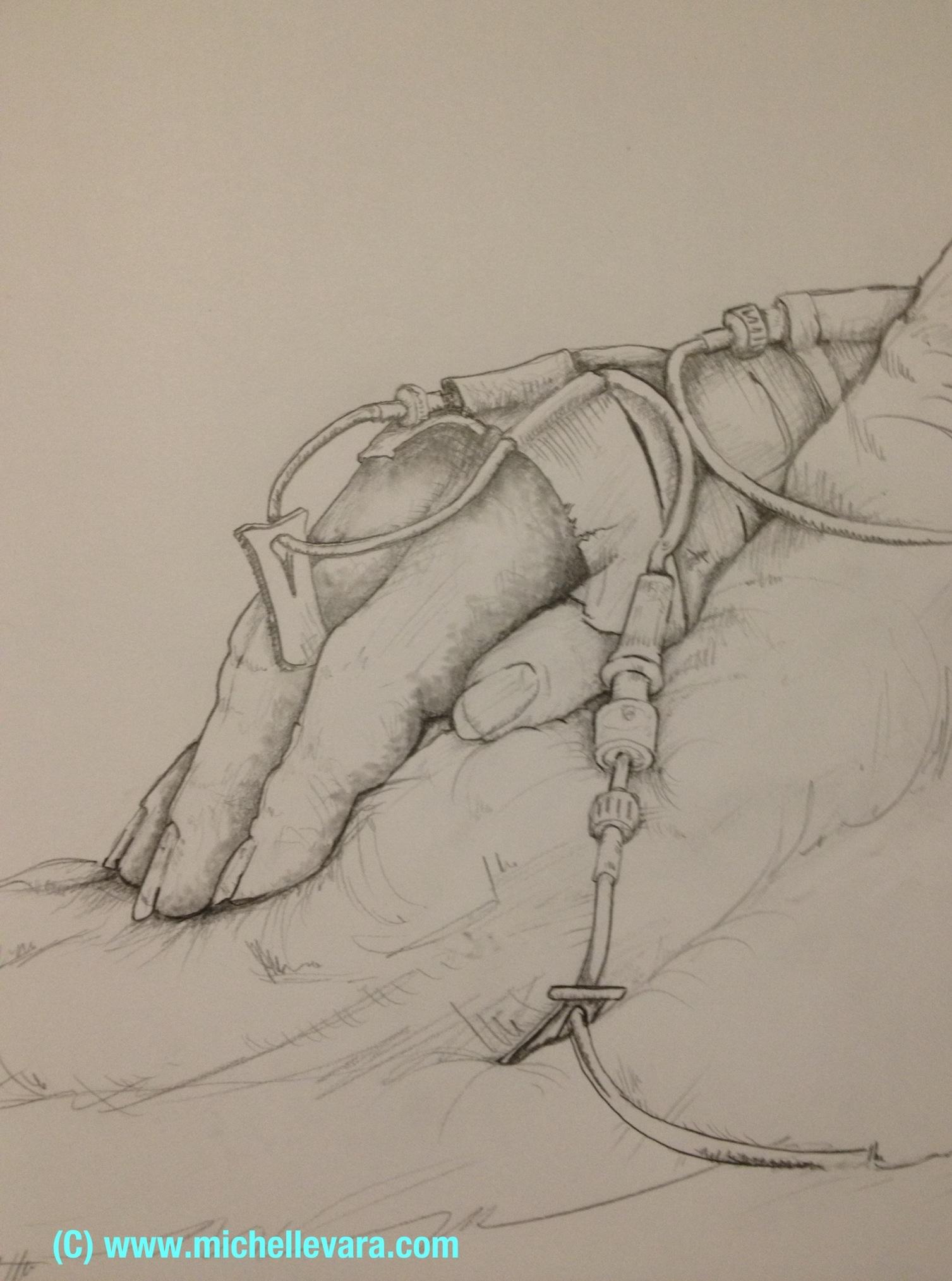 Medical art, Ohio, Cleveland clinic, pencils drawings, Michelle vara, Ballard rd art studio,