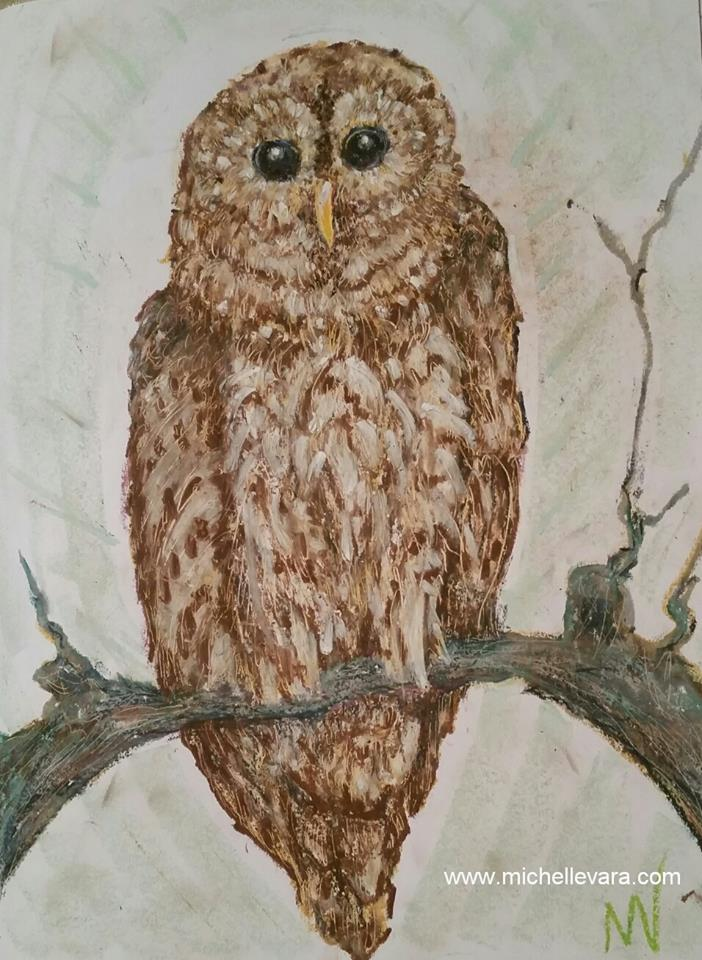 Barred Owl Oil Pastel