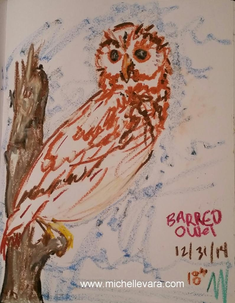 Oil Sketch Barred Owl