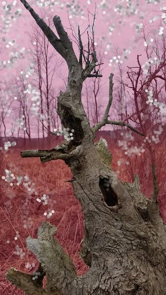 Natures way- manipulated photograph