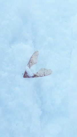 Snow Angel. Photograph